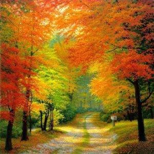 Осенняя лесная дорога-1
