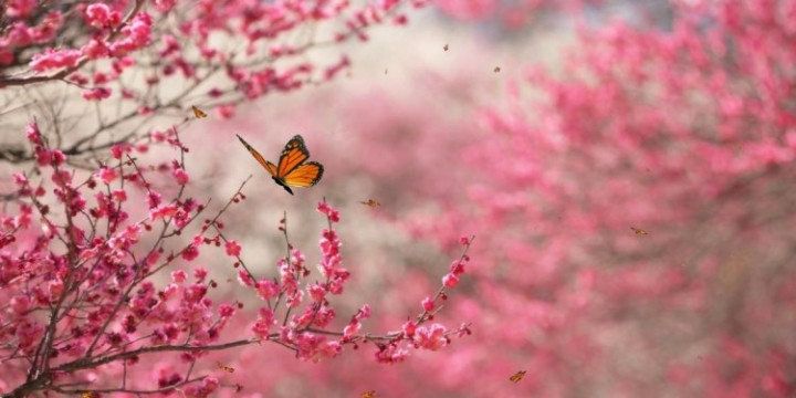 beautiful-nature-pink-trees-butterfly-free-hd-wallpapers-750x375
