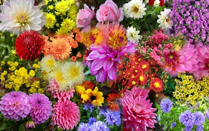 wallpaper-hd-nature-flower-1